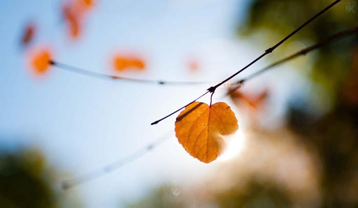 thơ bốn mùa xuân hạ thu đông