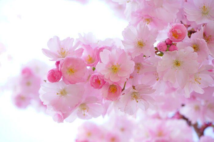 chùm thơ xuân, mùa xuân, hoa đào