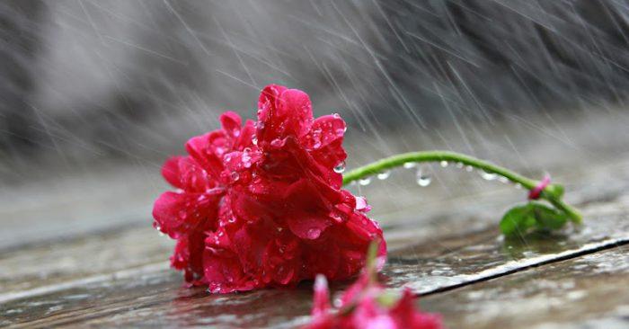 Tiếng dương cầm thánh thót trong mưa