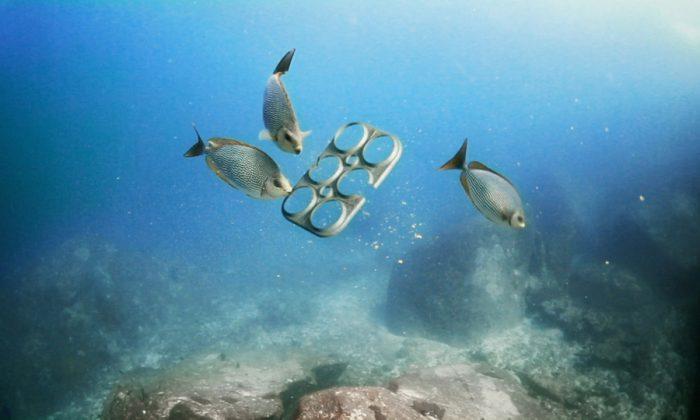 ô nhiễm đại dương