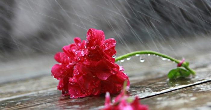 chiều mưa